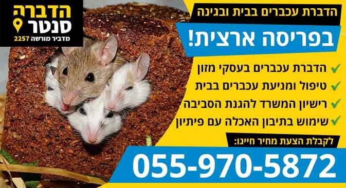 הדברת עכברים בבית ובגינה