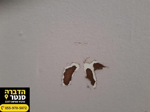 סימני טרמיטים בקיר גבס