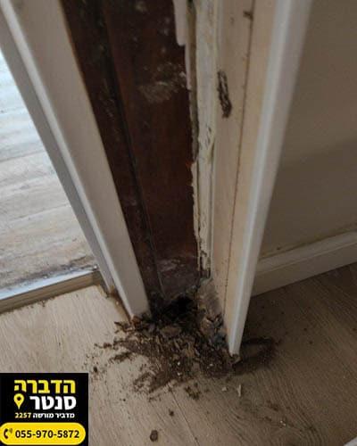 נזק של טרמיטים למשקוף הדלת