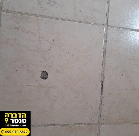 סימנים לטרמיטים - חורים בקירות